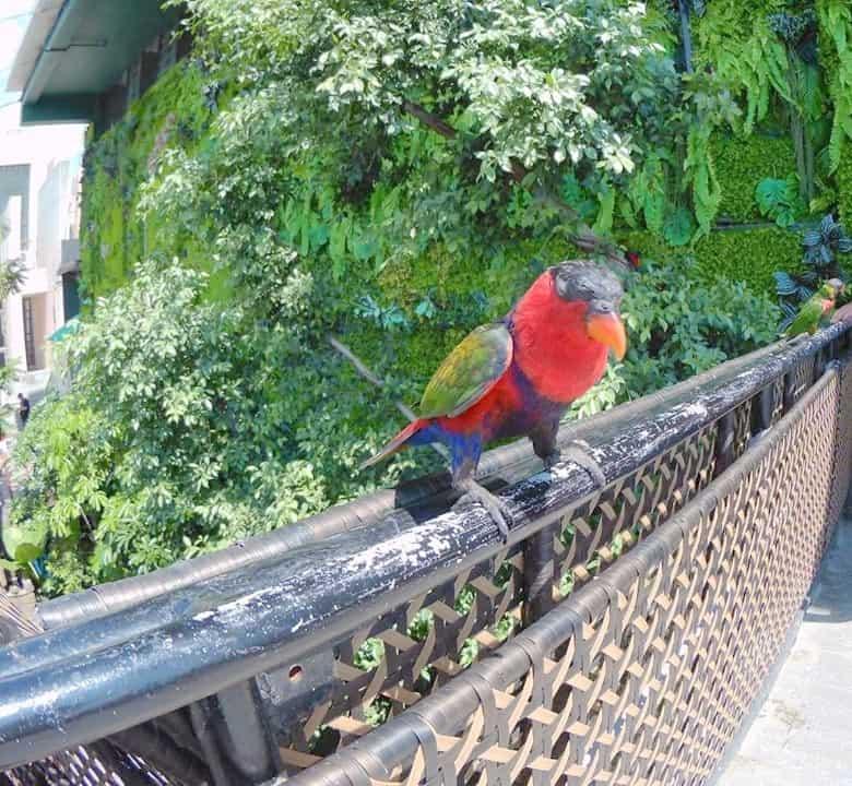 Cebu Ocean park Australian lorikeets