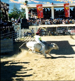 RODEO MASBATEÑO (LOCAL COWBOYS)